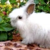 Чим годувати кроликів