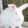 Чим відрізняється заєць від кролика