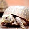 Чим харчуються черепахи?