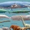 Найбільший кит у світі