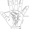 Що означають лінії на руці