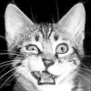 Гінгівіт у кішок. Харчування і лікування