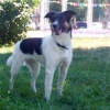 Як робити собаці профілактичну обробку (вуха, зуби, очі, кігті)