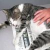 Як господар може допомогти кішці при пологах