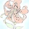 Як намалювати квітку