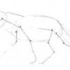 Як намалювати вовка олівцем?