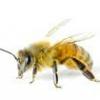Як убезпечити дитину від настирливих комах (бджіл, ос і комарів)