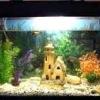 Як охолодити воду в акваріумі?