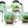 Як підтримати екосистему в домашньому акваріумі