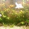 Як підготувати акваріум для рибок?