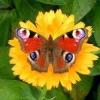 Як спіймати або сфотографувати метелика?
