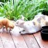 Як допомогти кішці при пологах