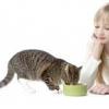 Як правильно годувати кота?
