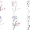Як правильно малювати троянду?