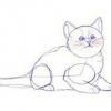 Як малювати котів?