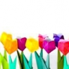 Як зробити з паперу тюльпан?