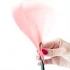 Як зробити троянду з грошової купюри