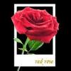 Як зробити в фотошопі ось таку картинку (троянда виростає з фотки) ?????