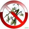 Як зменшити кількість комарів у квартирі