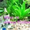 Як вибрати акваріумний грунт. Види акваріумних грунтів