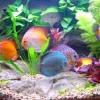 Як вибрати рибок для акваріума?