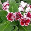 Як виростити кімнатні квіти з насіння?
