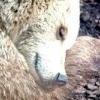 Які тварини впадають в сплячку взимку?