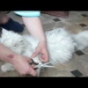 Ковтуни у кішок