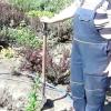 Лілія квітка посадка і догляд своїми руками