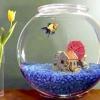 Чому каламутніє вода в акваріумі?