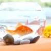 Чому помирають рибки в акваріумі?