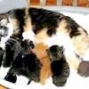 Пологи у кішки