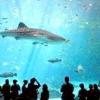 Найбільша риба у світі