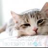 Нудота у кішок