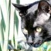 У кішки з'явилися залисини