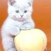 Тривалі пологи у кішки